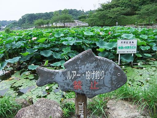 Rengejiike001.jpg